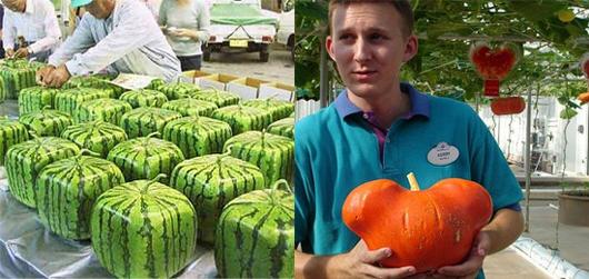 legumes etranges (3)