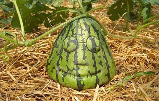 legumes etranges (4)