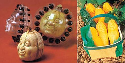 legumes etranges (6)