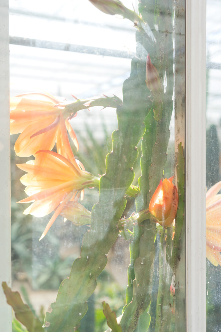 joelix-cactus-oase-ruurlo-1