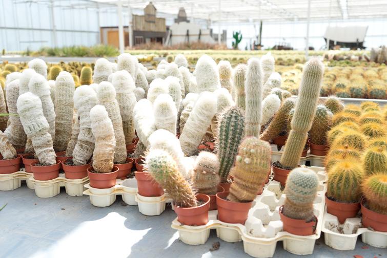 joelix-cactus-oase-ruurlo-10