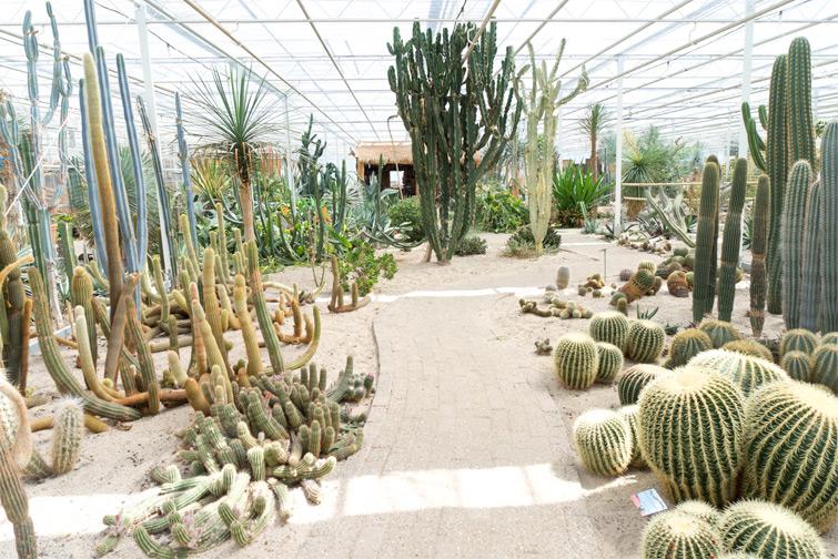 joelix-cactus-oase-ruurlo-13