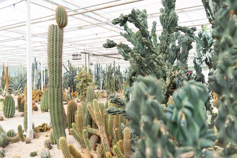 joelix-cactus-oase-ruurlo-14