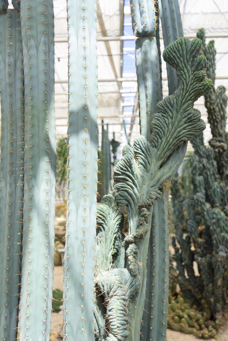joelix-cactus-oase-ruurlo-15
