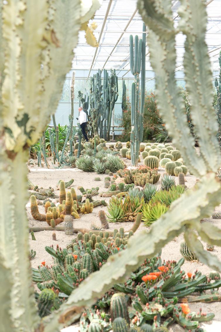 joelix-cactus-oase-ruurlo-17
