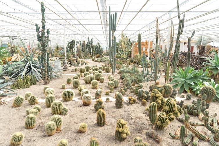 joelix-cactus-oase-ruurlo-18