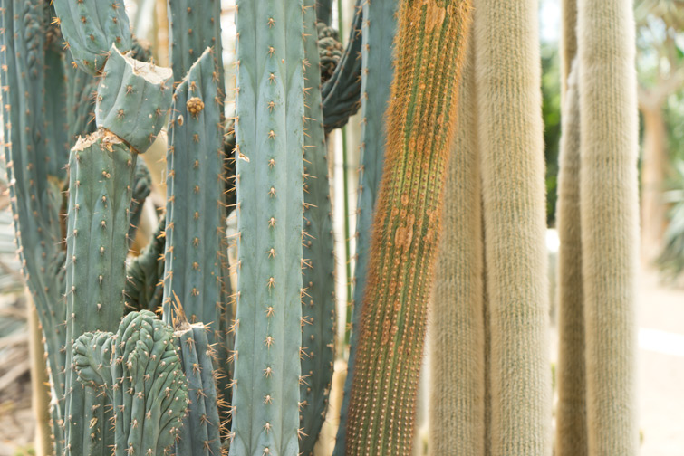 joelix-cactus-oase-ruurlo-20