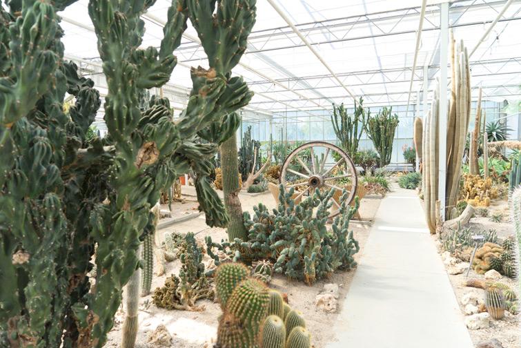 joelix-cactus-oase-ruurlo-4