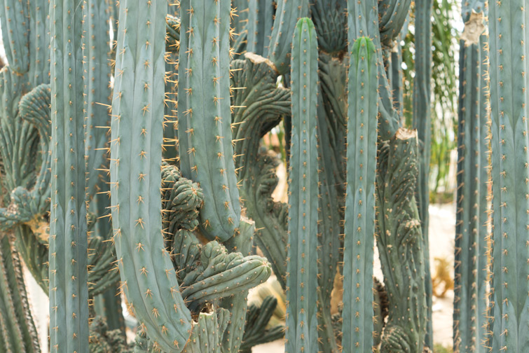 joelix-cactus-oase-ruurlo-5