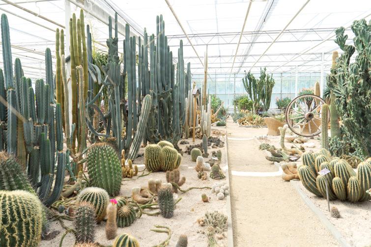 joelix-cactus-oase-ruurlo-6