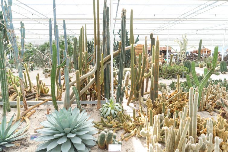 joelix-cactus-oase-ruurlo-9